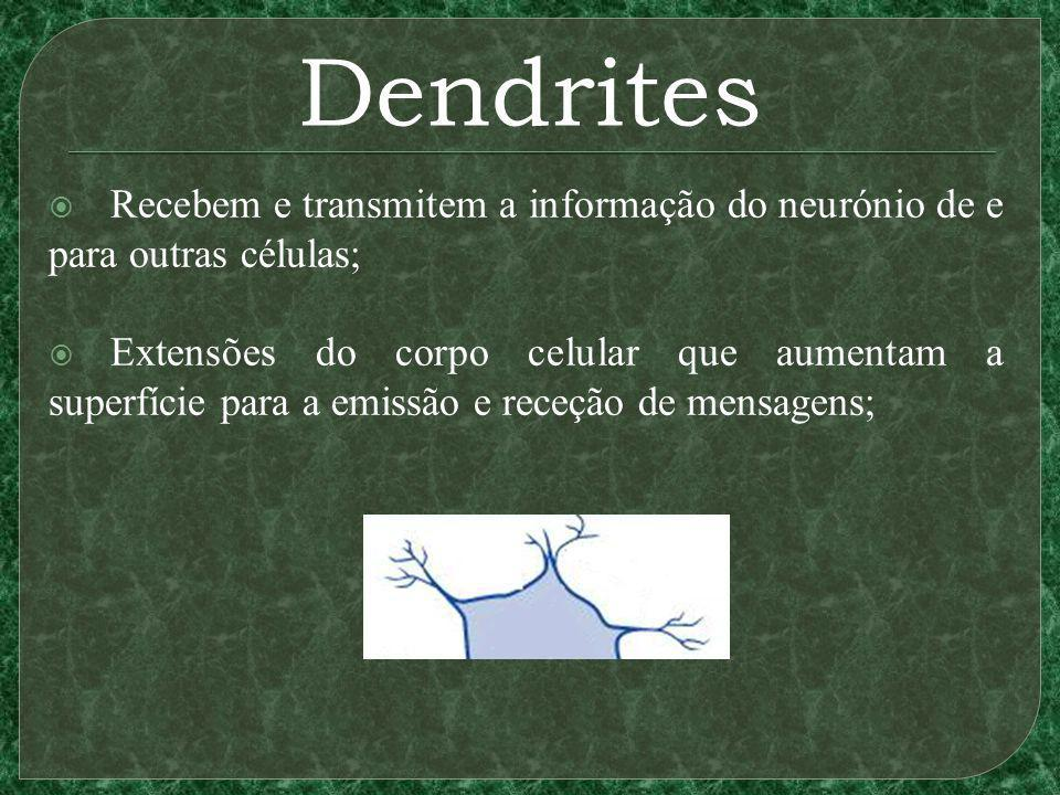 Dendrites Recebem e transmitem a informação do neurónio de e para outras células; Extensões do corpo celular que aumentam a superfície para a emissão e receção de mensagens;