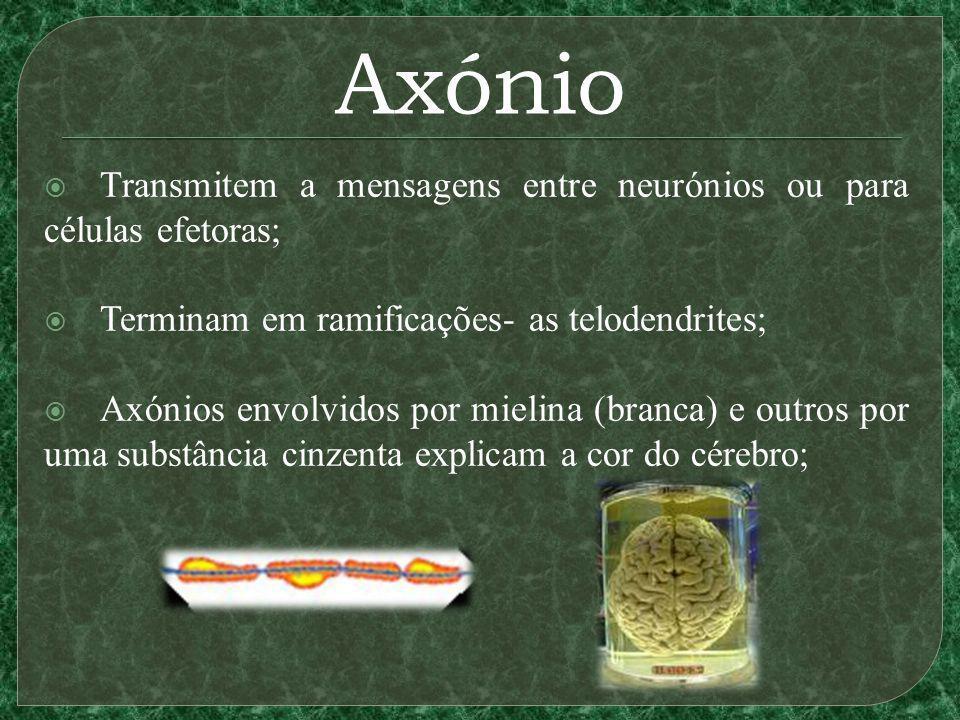 Axónio Transmitem a mensagens entre neurónios ou para células efetoras; Terminam em ramificações- as telodendrites; Axónios envolvidos por mielina (br