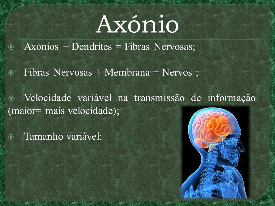 Axónio Axónios + Dendrites = Fibras Nervosas; Fibras Nervosas + Membrana = Nervos ; Velocidade variável na transmissão de informação (maior= mais velocidade); Tamanho variável;