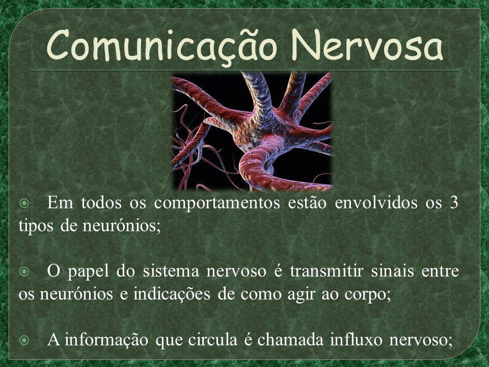 Comunicação Nervosa Em todos os comportamentos estão envolvidos os 3 tipos de neurónios; O papel do sistema nervoso é transmitir sinais entre os neurónios e indicações de como agir ao corpo; A informação que circula é chamada influxo nervoso;