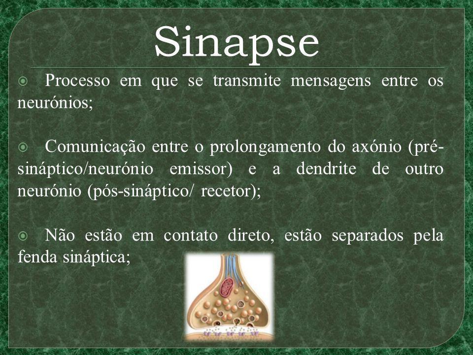 Sinapse Processo em que se transmite mensagens entre os neurónios; Comunicação entre o prolongamento do axónio (pré- sináptico/neurónio emissor) e a dendrite de outro neurónio (pós-sináptico/ recetor); Não estão em contato direto, estão separados pela fenda sináptica;