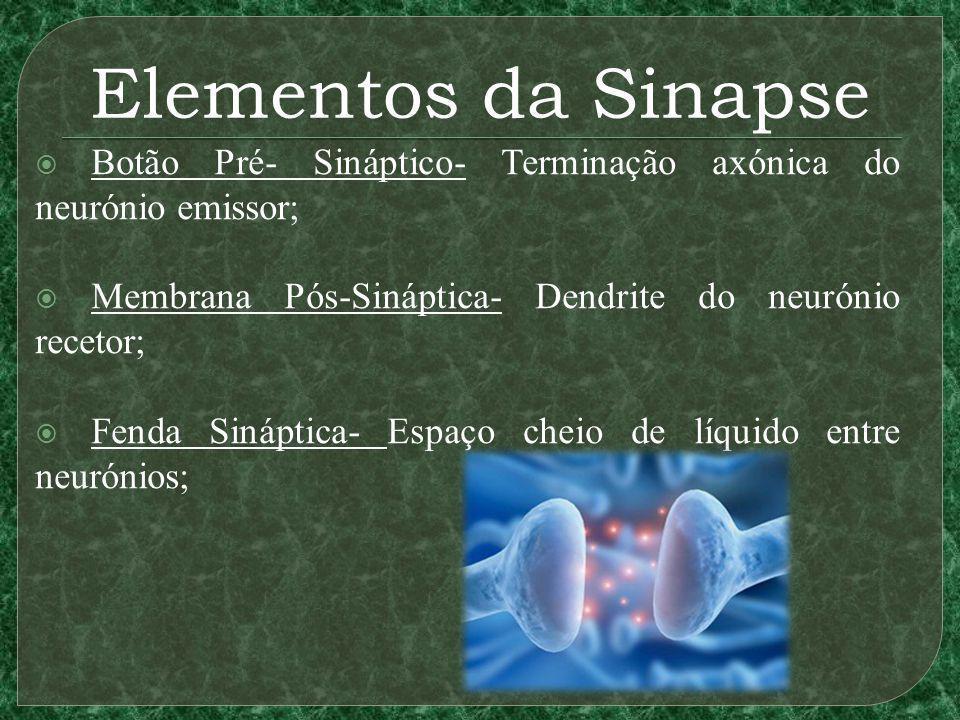 Elementos da Sinapse Botão Pré- Sináptico- Terminação axónica do neurónio emissor; Membrana Pós-Sináptica- Dendrite do neurónio recetor; Fenda Sináptica- Espaço cheio de líquido entre neurónios;