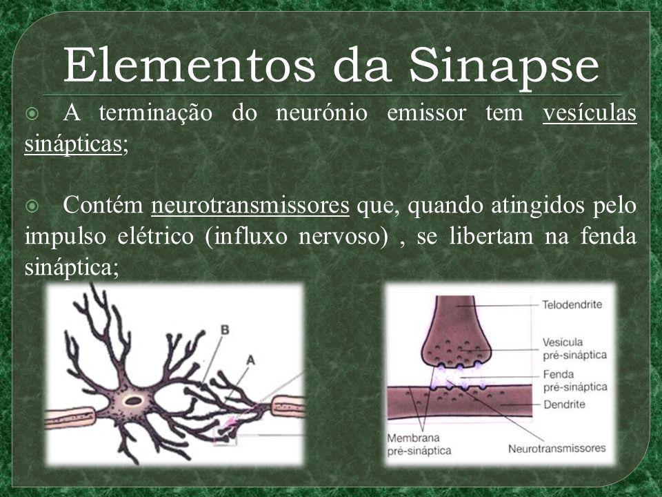 Elementos da Sinapse A terminação do neurónio emissor tem vesículas sinápticas; Contém neurotransmissores que, quando atingidos pelo impulso elétrico