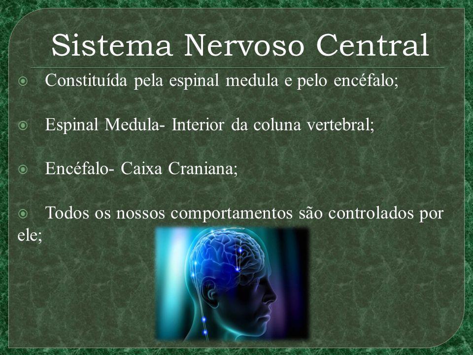 Sistema Nervoso Central Constituída pela espinal medula e pelo encéfalo; Espinal Medula- Interior da coluna vertebral; Encéfalo- Caixa Craniana; Todos os nossos comportamentos são controlados por ele;