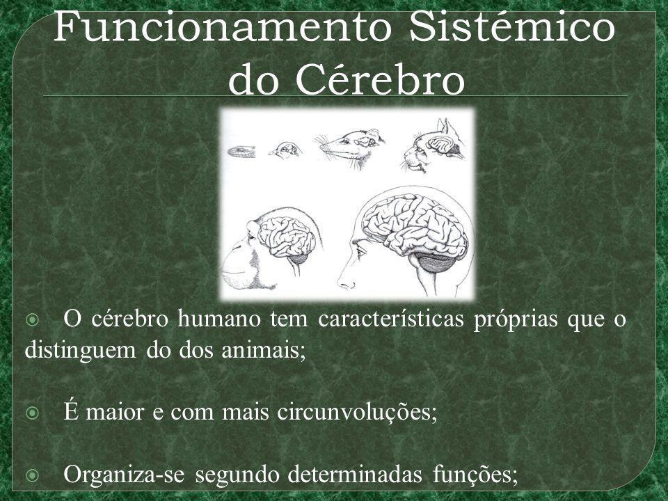 O cérebro humano tem características próprias que o distinguem do dos animais; É maior e com mais circunvoluções; Organiza-se segundo determinadas fun