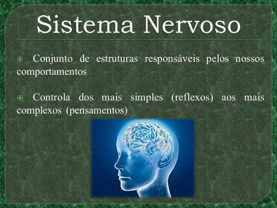 Sistema Nervoso Conjunto de estruturas responsáveis pelos nossos comportamentos Controla dos mais simples (reflexos) aos mais complexos (pensamentos)