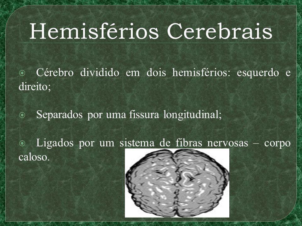Hemisférios Cerebrais Cérebro dividido em dois hemisférios: esquerdo e direito; Separados por uma fissura longitudinal; Ligados por um sistema de fibras nervosas – corpo caloso.