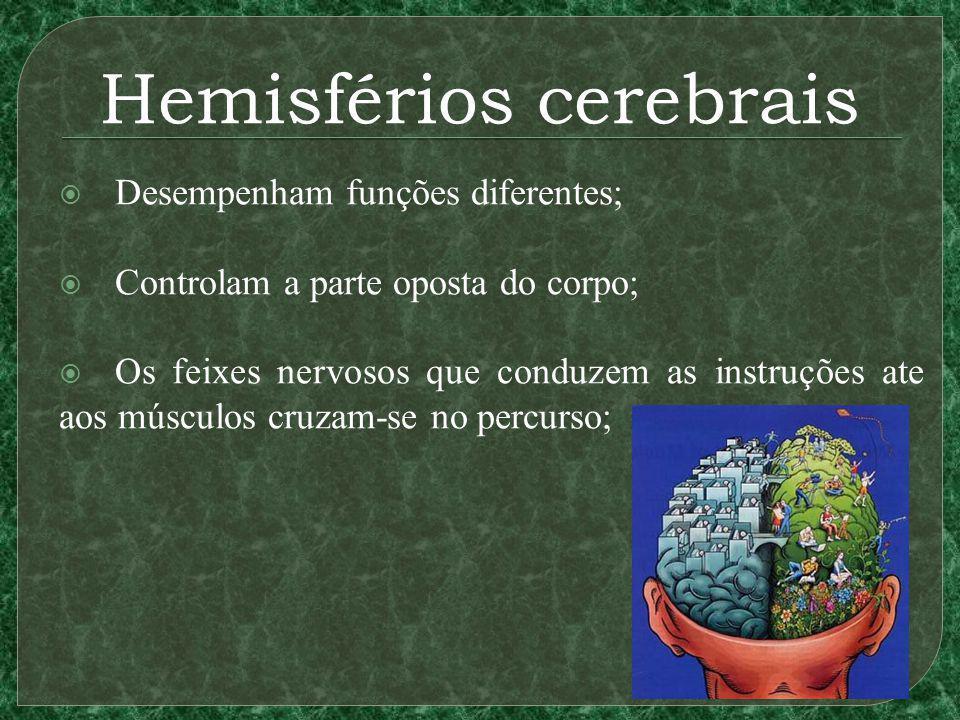 Hemisférios cerebrais Desempenham funções diferentes; Controlam a parte oposta do corpo; Os feixes nervosos que conduzem as instruções ate aos músculos cruzam-se no percurso;