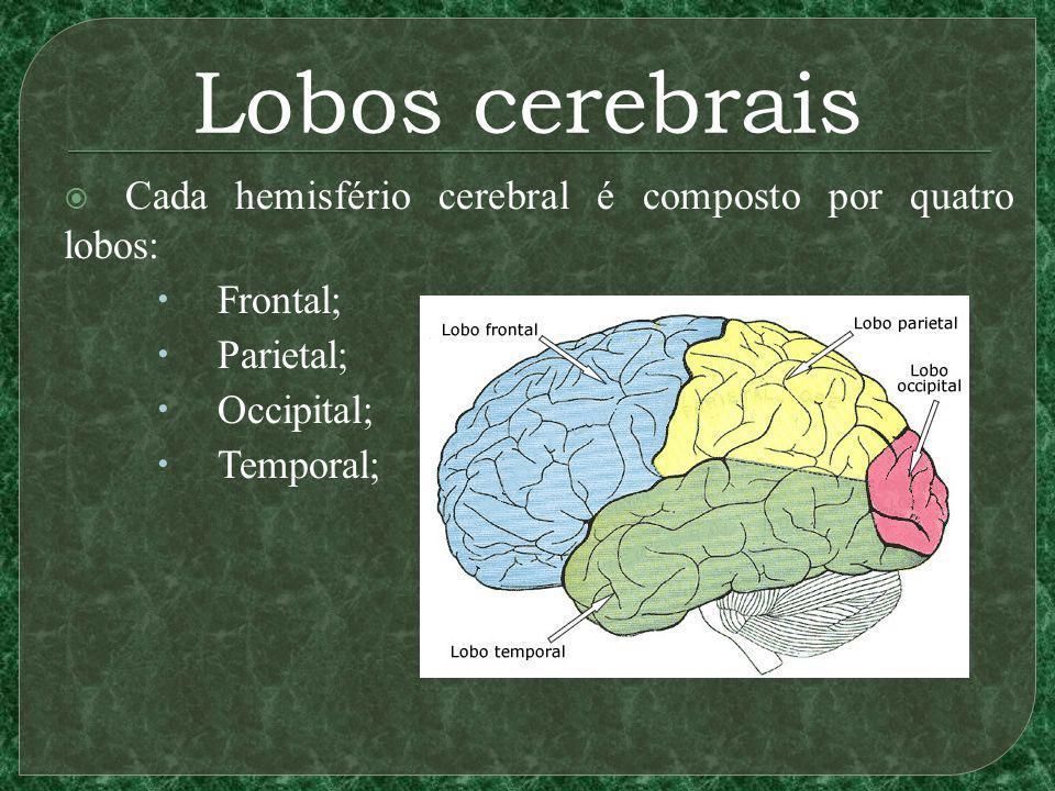 Lobos cerebrais Cada hemisfério cerebral é composto por quatro lobos: Frontal; Parietal; Occipital; Temporal;