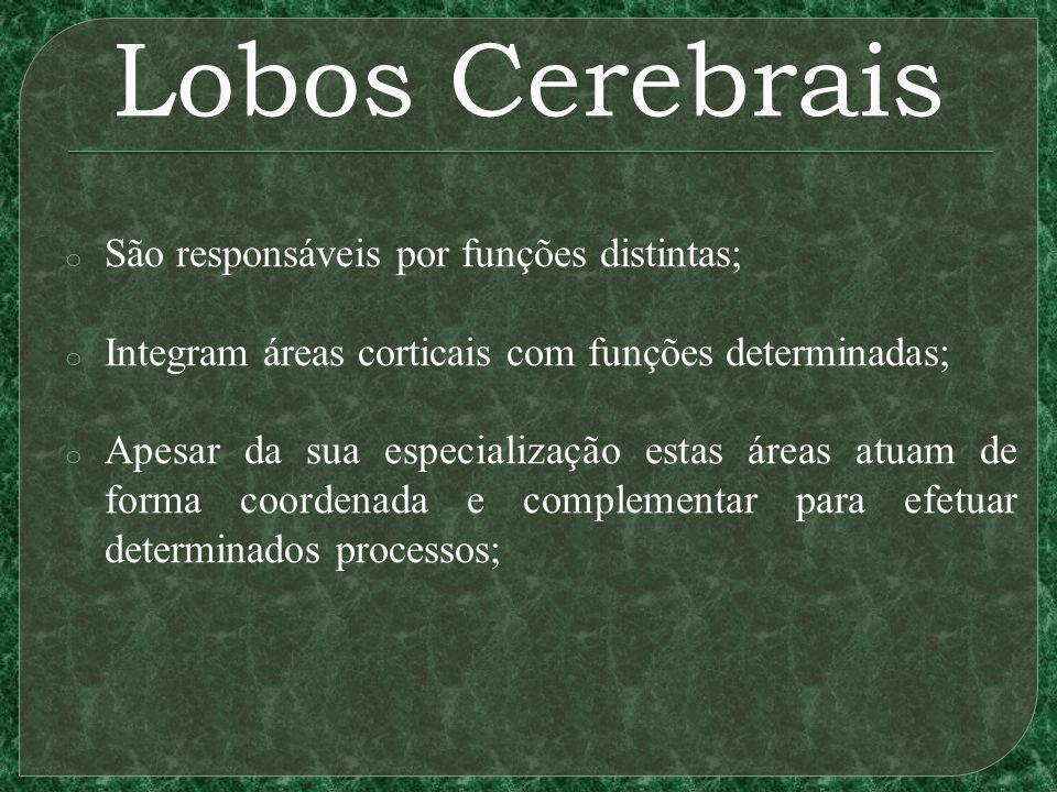 Lobos Cerebrais o São responsáveis por funções distintas; o Integram áreas corticais com funções determinadas; o Apesar da sua especialização estas ár