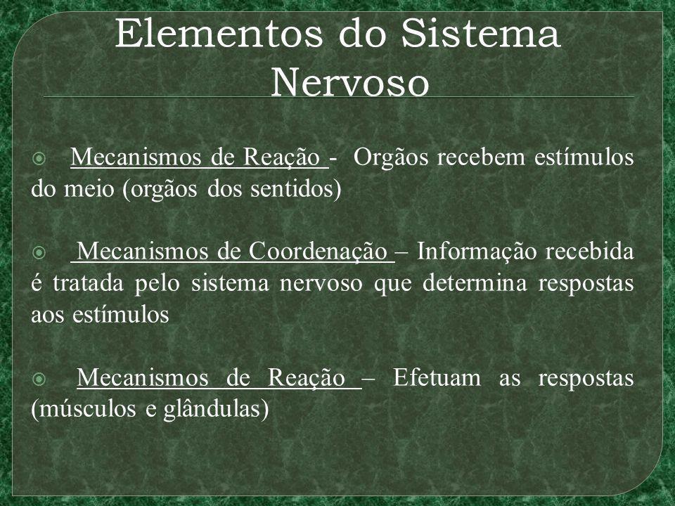 Elementos do Sistema Nervoso Mecanismos de Reação - Orgãos recebem estímulos do meio (orgãos dos sentidos) Mecanismos de Coordenação – Informação rece