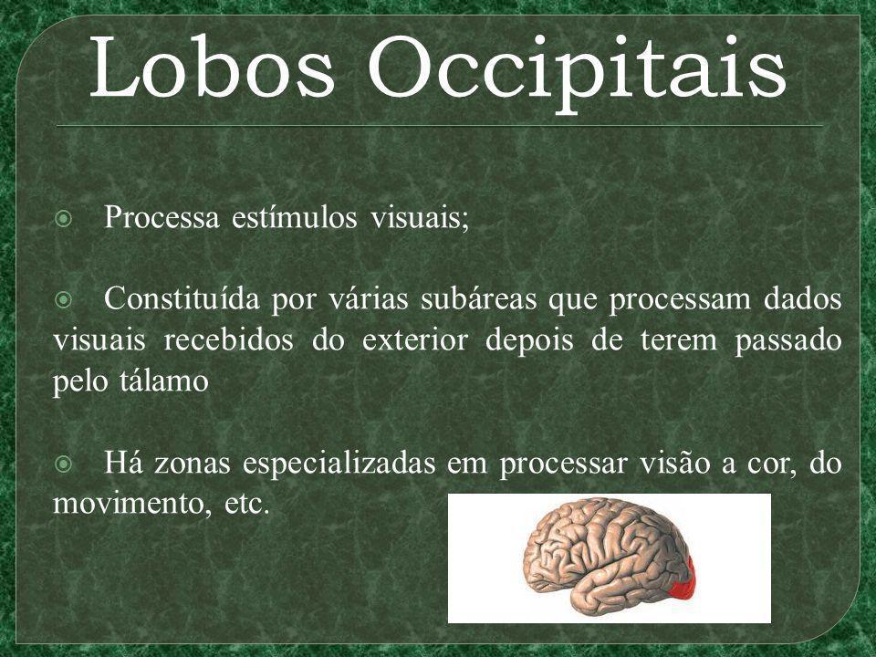 Lobos Occipitais Processa estímulos visuais; Constituída por várias subáreas que processam dados visuais recebidos do exterior depois de terem passado