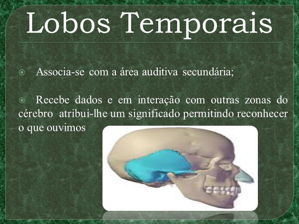Lobos Temporais Associa-se com a área auditiva secundária; Recebe dados e em interação com outras zonas do cérebro atribui-lhe um significado permitindo reconhecer o que ouvimos