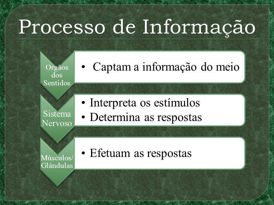 Processo de Informação Orgãos dos Sentidos Captam a informação do meio Sistema Nervoso Interpreta os estímulos Determina as respostas Músculos/ Glândulas Efetuam as respostas