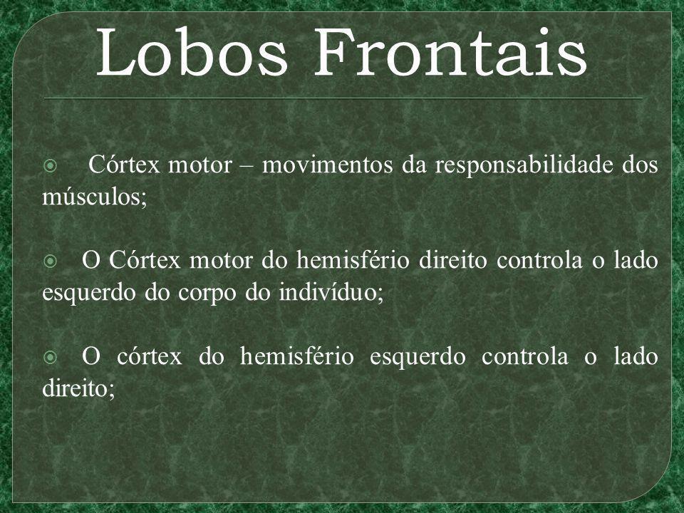 Lobos Frontais Córtex motor – movimentos da responsabilidade dos músculos; O Córtex motor do hemisfério direito controla o lado esquerdo do corpo do indivíduo; O córtex do hemisfério esquerdo controla o lado direito;