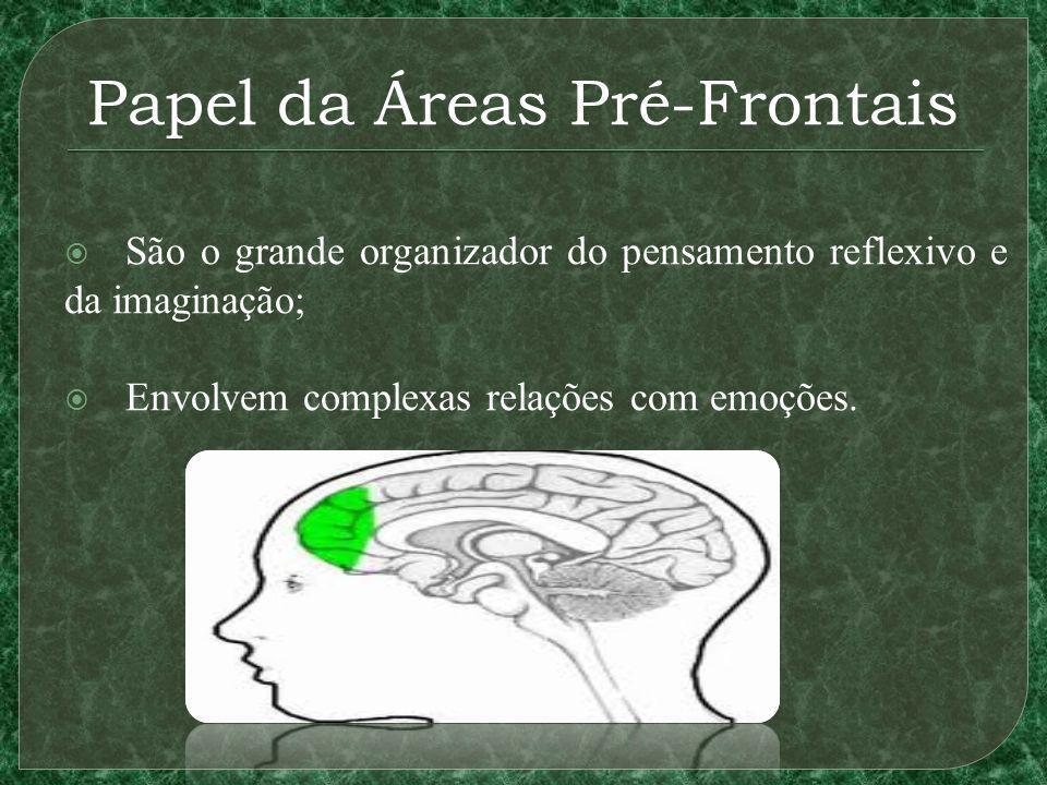 Papel da Áreas Pré-Frontais São o grande organizador do pensamento reflexivo e da imaginação; Envolvem complexas relações com emoções.