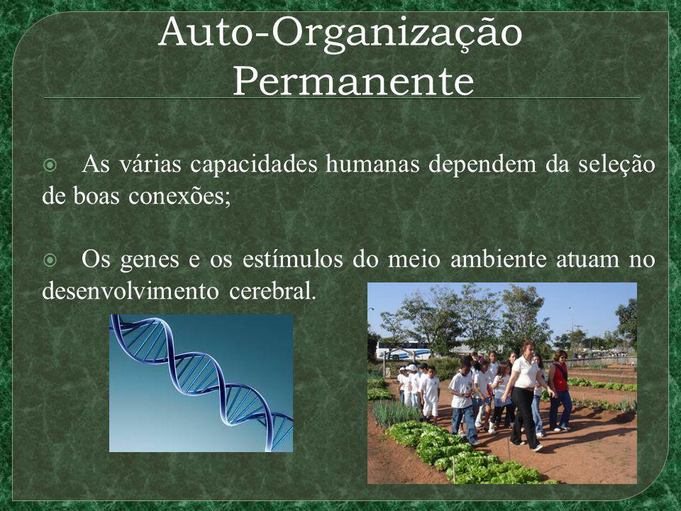 Auto-Organização Permanente As várias capacidades humanas dependem da seleção de boas conexões; Os genes e os estímulos do meio ambiente atuam no desenvolvimento cerebral.