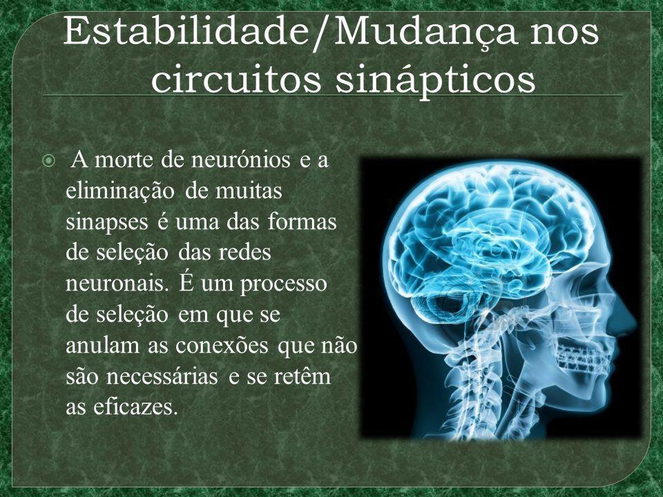 Estabilidade/Mudança nos circuitos sinápticos A morte de neurónios e a eliminação de muitas sinapses é uma das formas de seleção das redes neuronais.