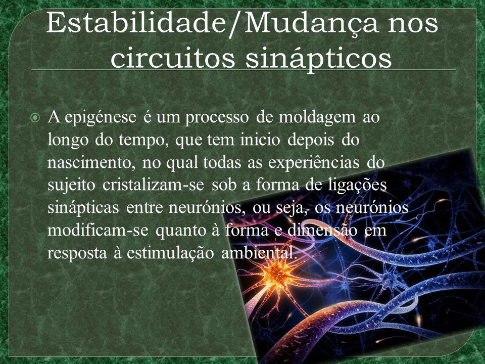 Estabilidade/Mudança nos circuitos sinápticos A epigénese é um processo de moldagem ao longo do tempo, que tem inicio depois do nascimento, no qual to