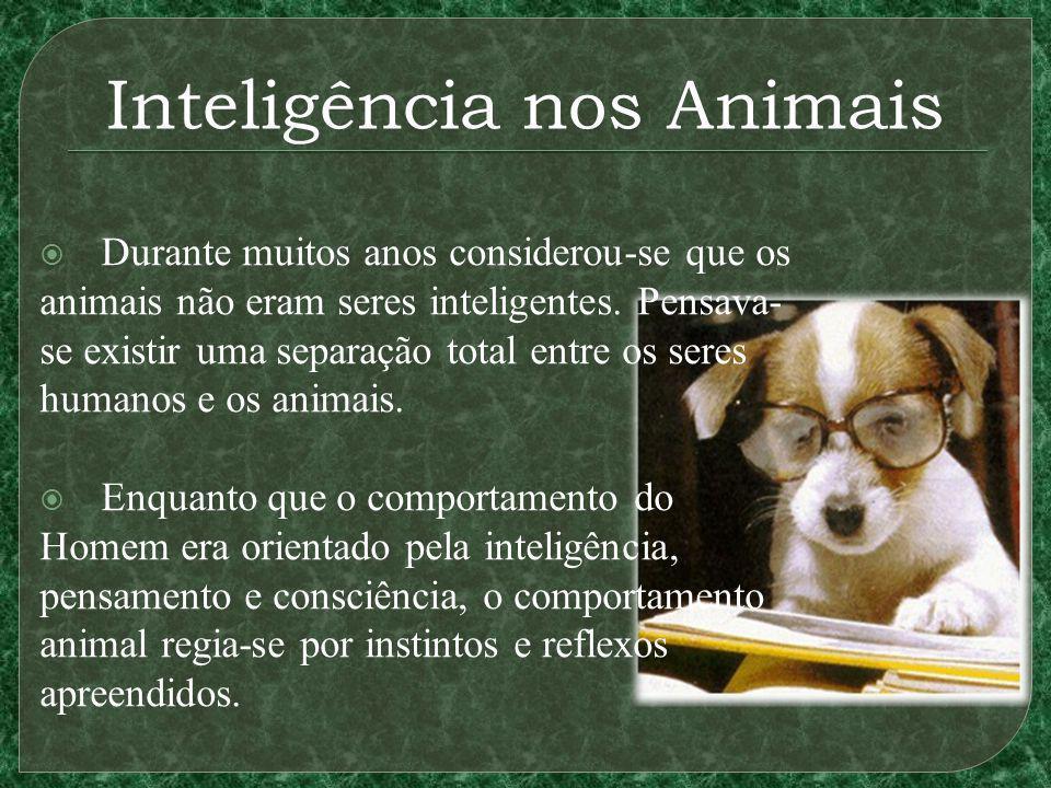 Inteligência nos Animais Durante muitos anos considerou-se que os animais não eram seres inteligentes. Pensava- se existir uma separação total entre o