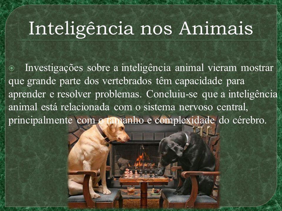 Inteligência nos Animais Investigações sobre a inteligência animal vieram mostrar que grande parte dos vertebrados têm capacidade para aprender e resolver problemas.