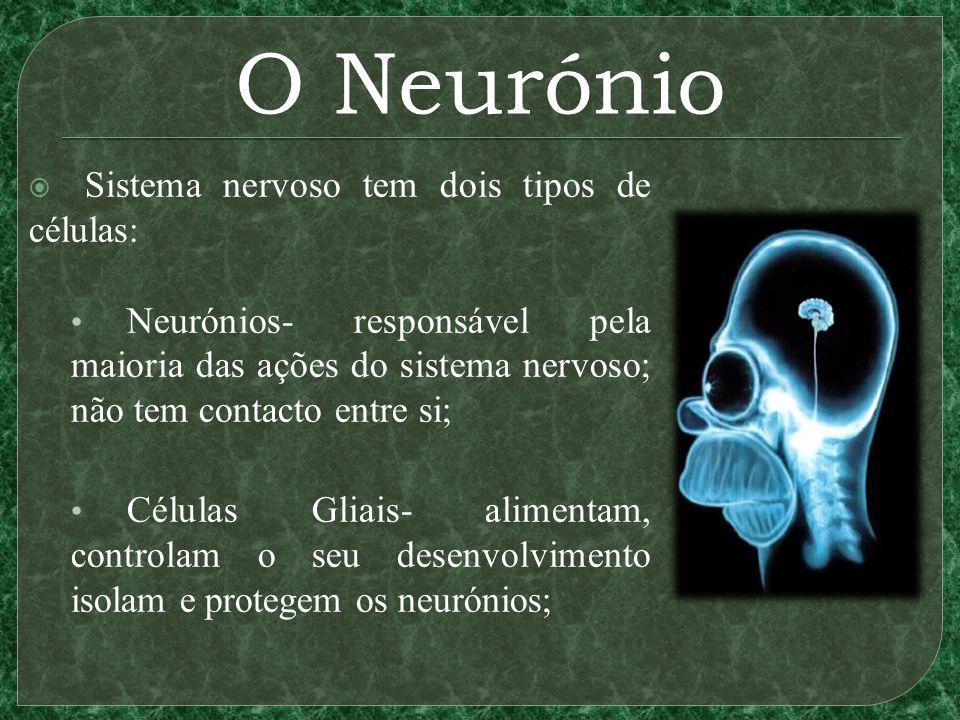 O Neurónio Sistema nervoso tem dois tipos de células: Neurónios- responsável pela maioria das ações do sistema nervoso; não tem contacto entre si; Células Gliais- alimentam, controlam o seu desenvolvimento isolam e protegem os neurónios;