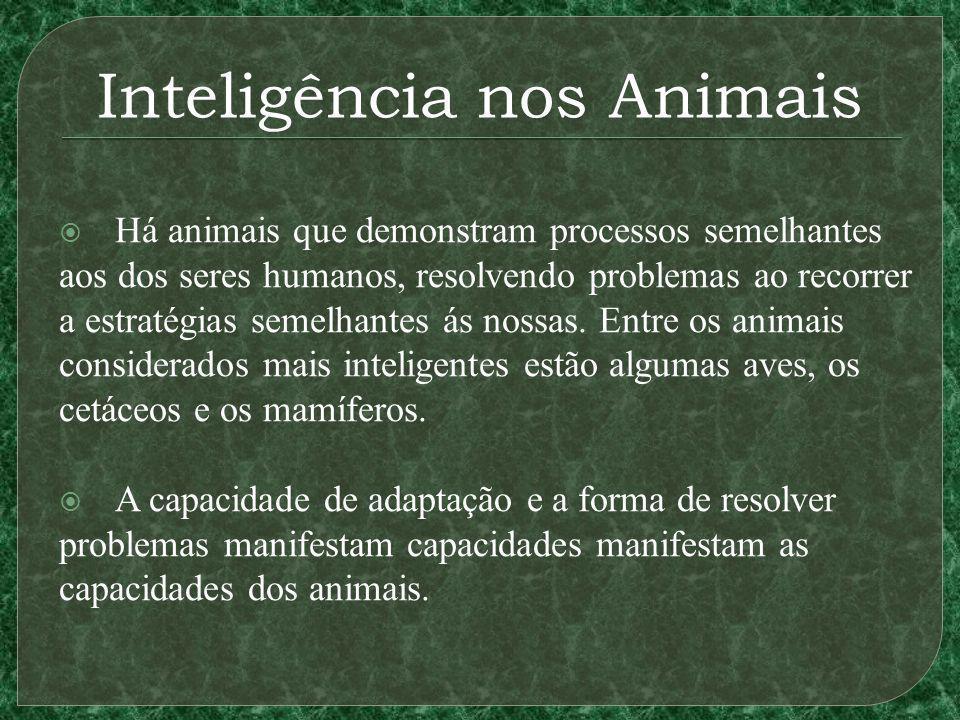 Inteligência nos Animais Há animais que demonstram processos semelhantes aos dos seres humanos, resolvendo problemas ao recorrer a estratégias semelhantes ás nossas.