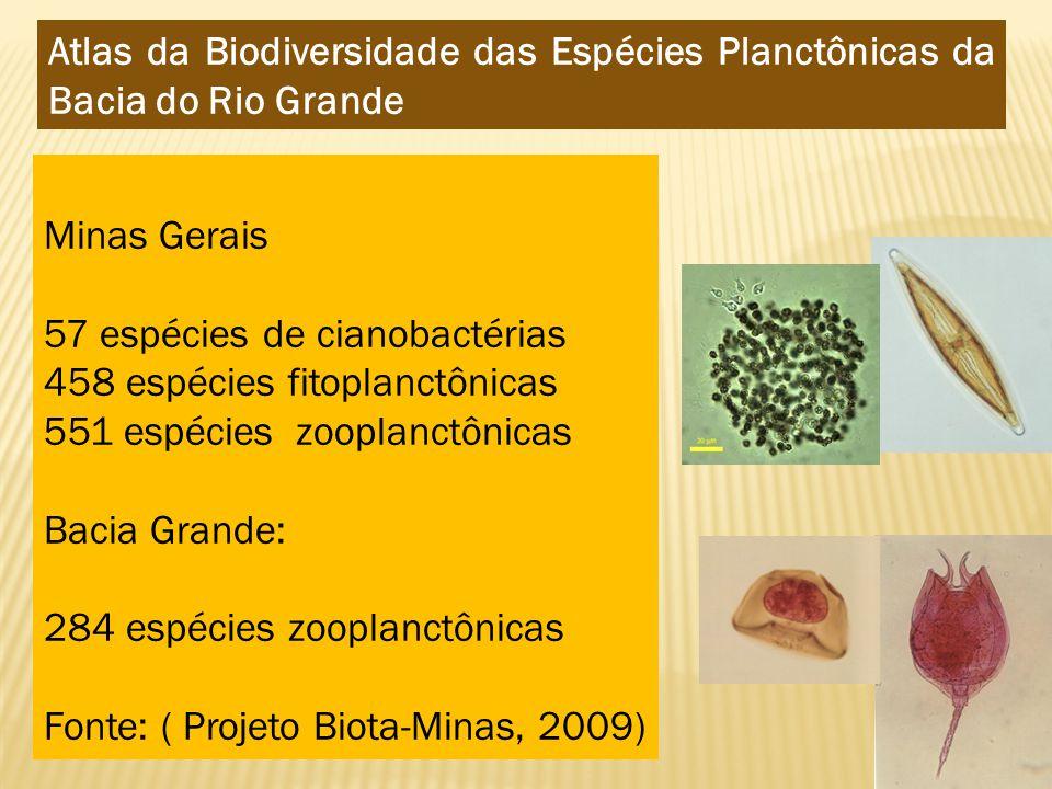 Minas Gerais 57 espécies de cianobactérias 458 espécies fitoplanctônicas 551 espécies zooplanctônicas Bacia Grande: 284 espécies zooplanctônicas Fonte: ( Projeto Biota-Minas, 2009) Atlas da Biodiversidade das Espécies Planctônicas da Bacia do Rio Grande