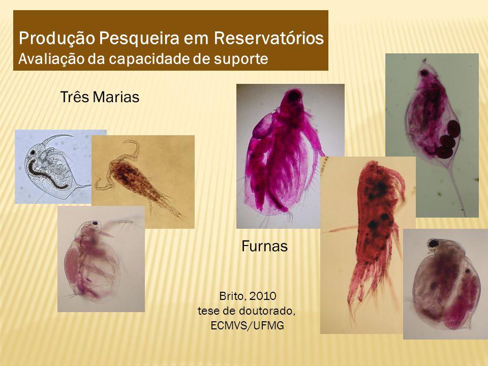 Produção Pesqueira em Reservatórios Avaliação da capacidade de suporte Três Marias Furnas Brito, 2010 tese de doutorado, ECMVS/UFMG