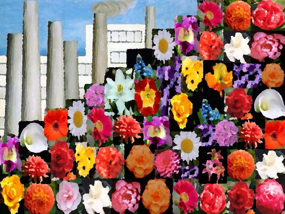 Sujeitos da pesquisa:Flores e Cores