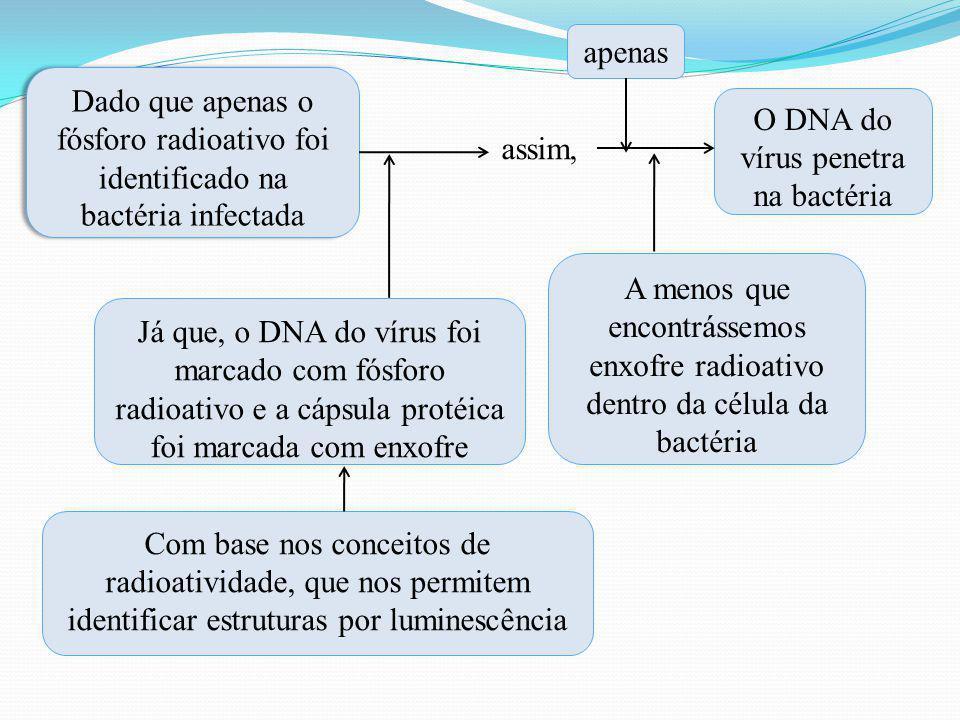 Dado que apenas o fósforo radioativo foi identificado na bactéria infectada assim, Já que, o DNA do vírus foi marcado com fósforo radioativo e a cápsu