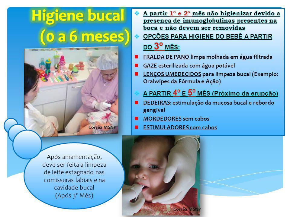 DEDEIRAS MORDEDORES MAM MAM Oral Care Rabbit A partir 3 meses Massaging Brush