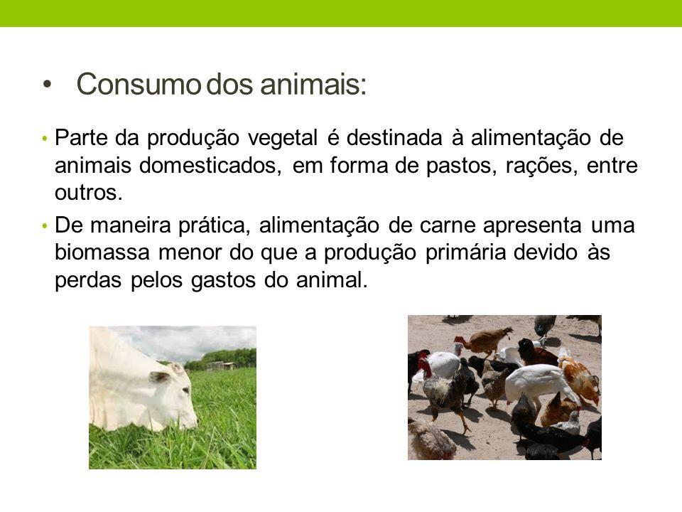 Consumo dos animais: Parte da produção vegetal é destinada à alimentação de animais domesticados, em forma de pastos, rações, entre outros. De maneira