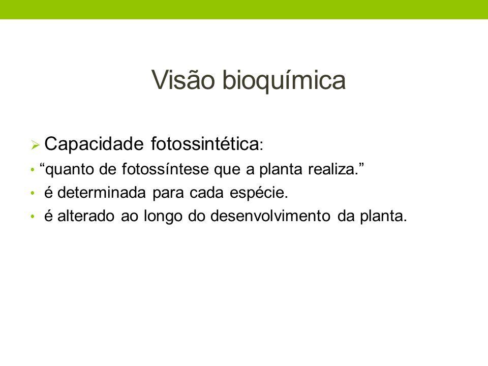 Visão bioquímica Capacidade fotossintética : quanto de fotossíntese que a planta realiza. é determinada para cada espécie. é alterado ao longo do dese
