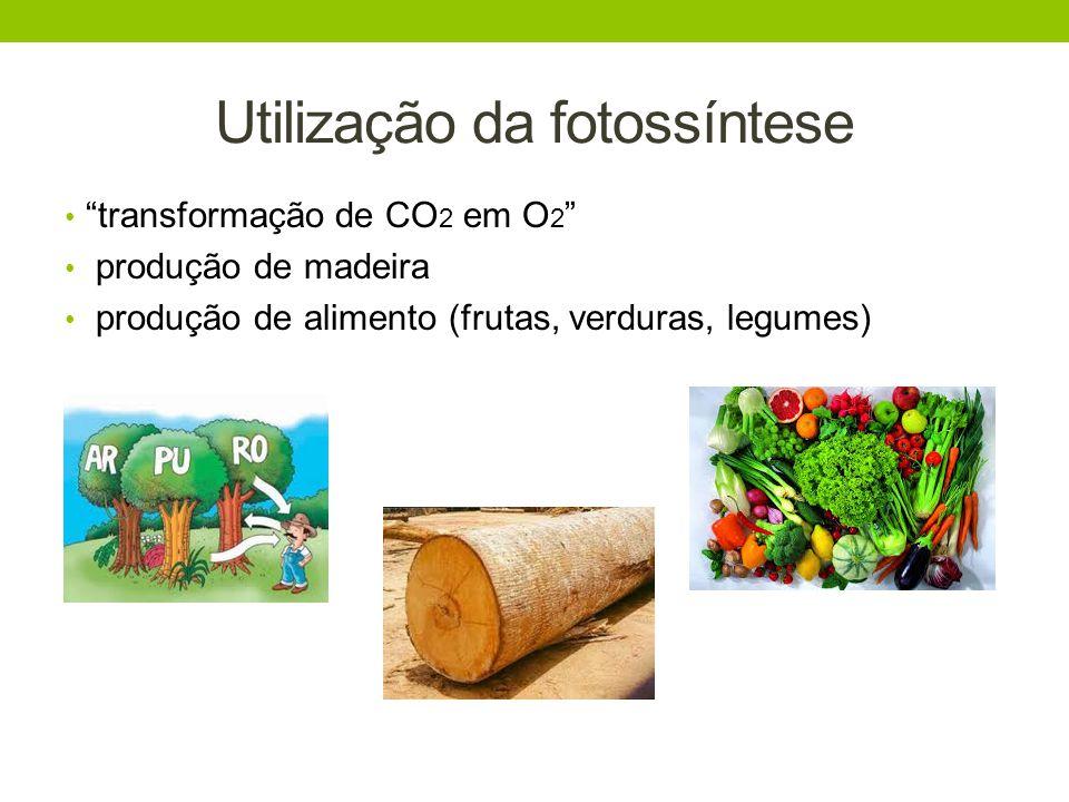 Consumo dos animais: Parte da produção vegetal é destinada à alimentação de animais domesticados, em forma de pastos, rações, entre outros.