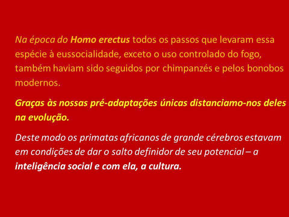 Na época do Homo erectus todos os passos que levaram essa espécie à eussocialidade, exceto o uso controlado do fogo, também haviam sido seguidos por c