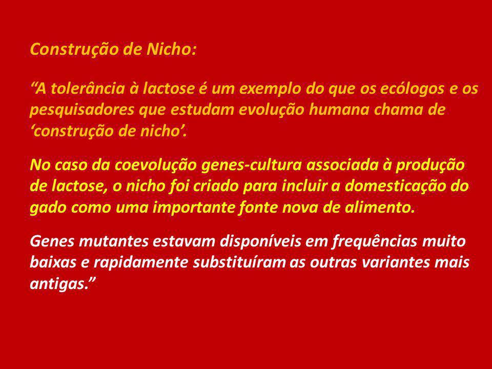 Construção de Nicho: A tolerância à lactose é um exemplo do que os ecólogos e os pesquisadores que estudam evolução humana chama de construção de nich