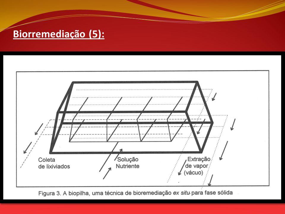 Biorremediação (5):