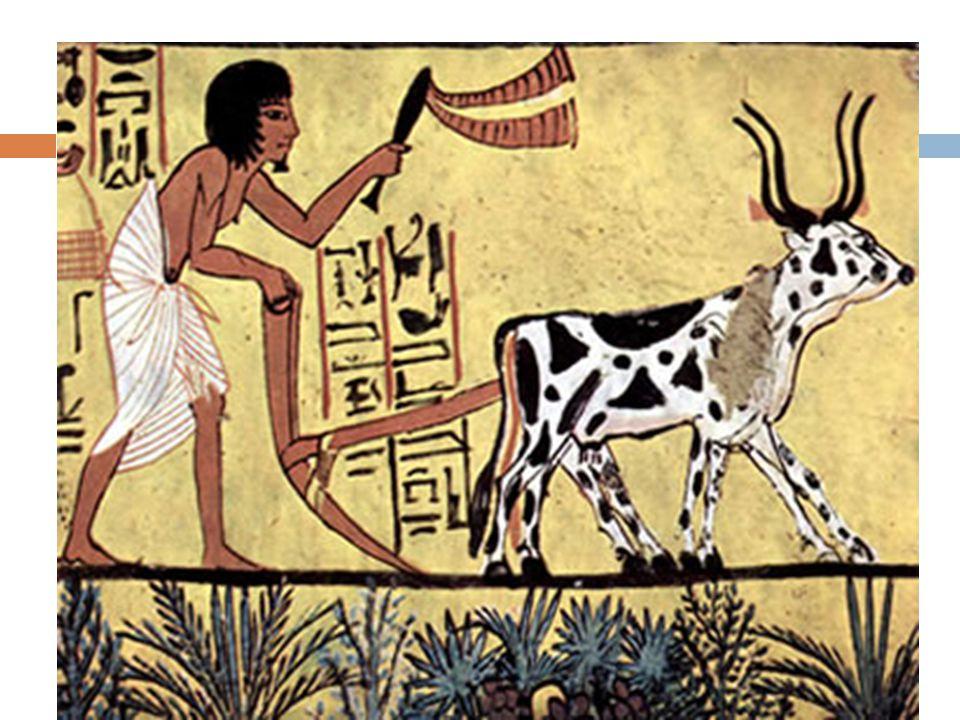 História Todos os povos da humanidade tiveram na gênese de sua existência duras necessidades Obteção alimentos Fome