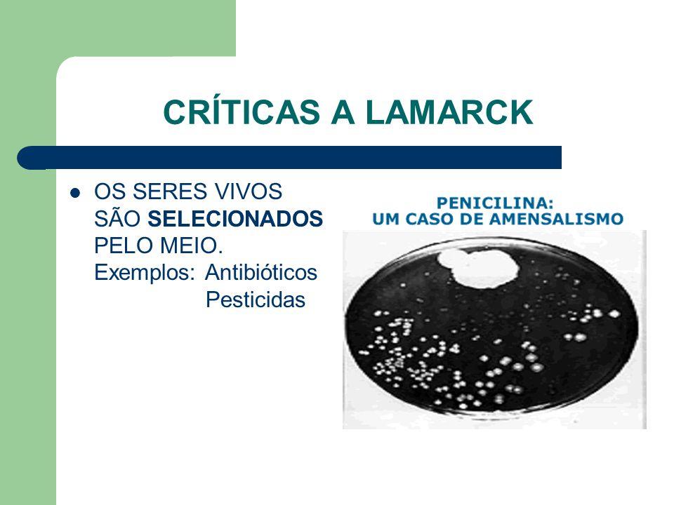 CRÍTICAS A LAMARCK OS SERES VIVOS SÃO SELECIONADOS PELO MEIO. Exemplos: Antibióticos Pesticidas