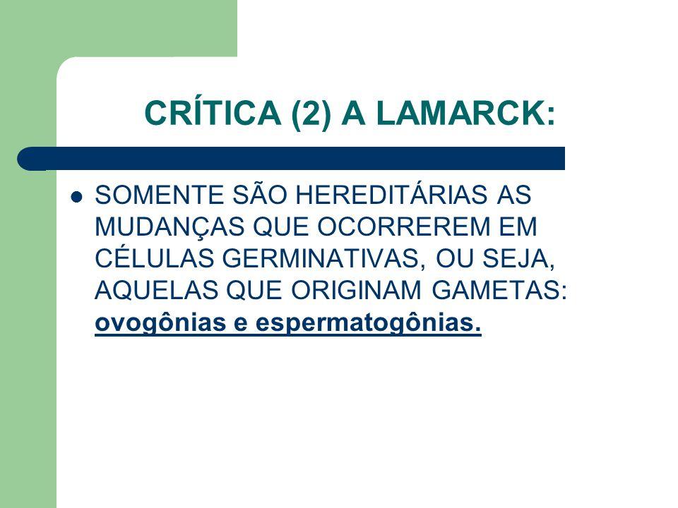 CRÍTICA (2) A LAMARCK: SOMENTE SÃO HEREDITÁRIAS AS MUDANÇAS QUE OCORREREM EM CÉLULAS GERMINATIVAS, OU SEJA, AQUELAS QUE ORIGINAM GAMETAS: ovogônias e