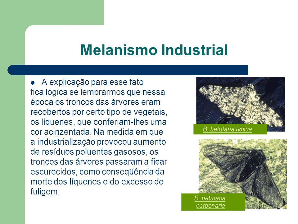 Melanismo Industrial A explicação para esse fato fica lógica se lembrarmos que nessa época os troncos das árvores eram recobertos por certo tipo de ve