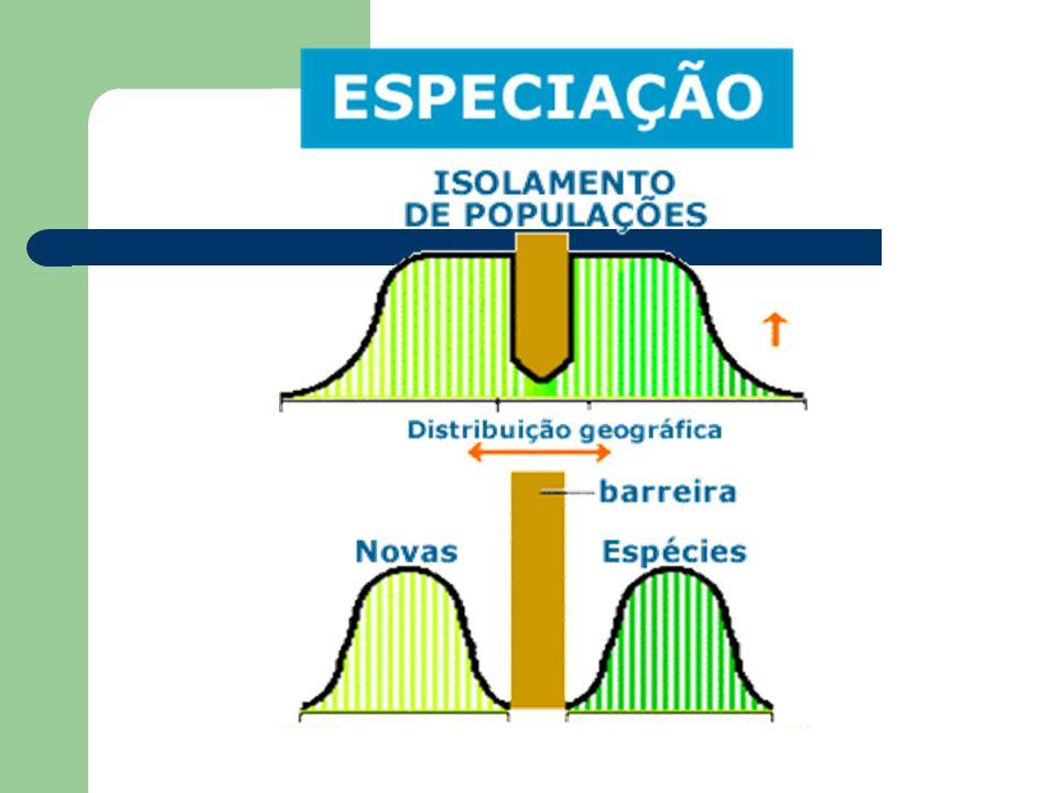 Especiação Divisão de uma espécie em duas reprodutivamente isoladas.
