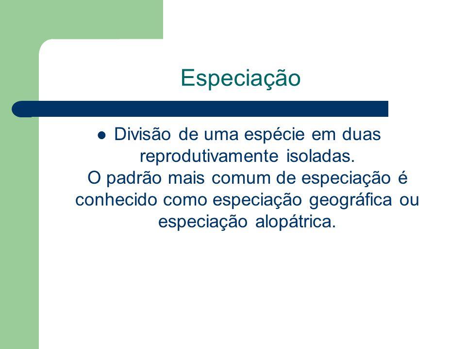 Especiação Divisão de uma espécie em duas reprodutivamente isoladas. O padrão mais comum de especiação é conhecido como especiação geográfica ou espec