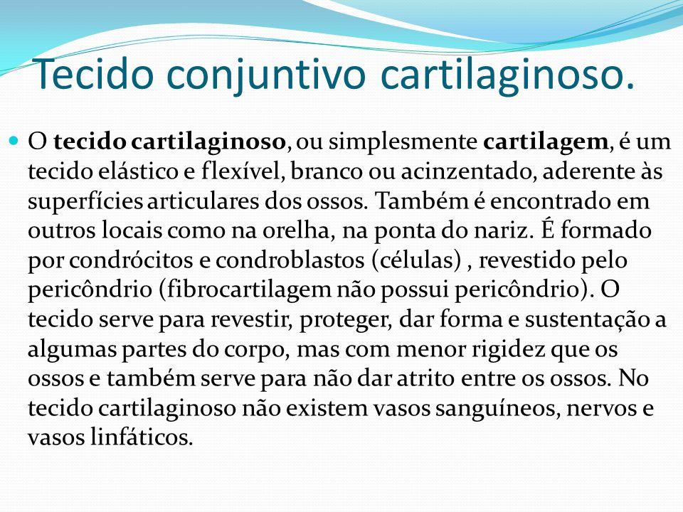 Tecido conjuntivo cartilaginoso. O tecido cartilaginoso, ou simplesmente cartilagem, é um tecido elástico e flexível, branco ou acinzentado, aderente