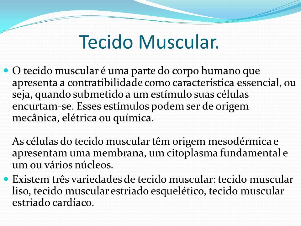 Tecido Muscular. O tecido muscular é uma parte do corpo humano que apresenta a contratibilidade como característica essencial, ou seja, quando submeti