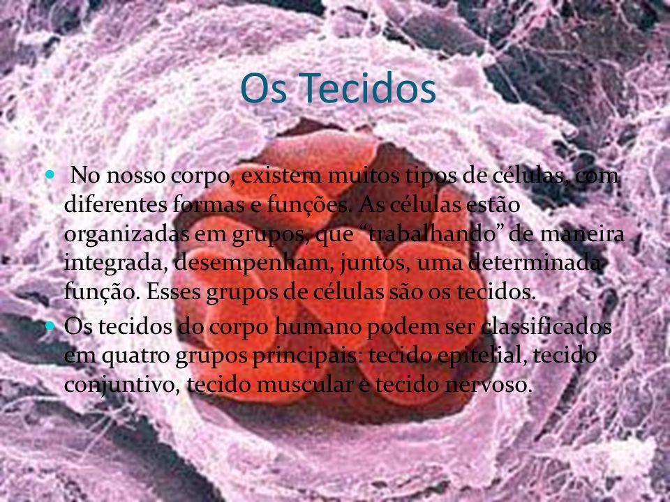 Os Tecidos No nosso corpo, existem muitos tipos de células, com diferentes formas e funções. As células estão organizadas em grupos, que trabalhando d