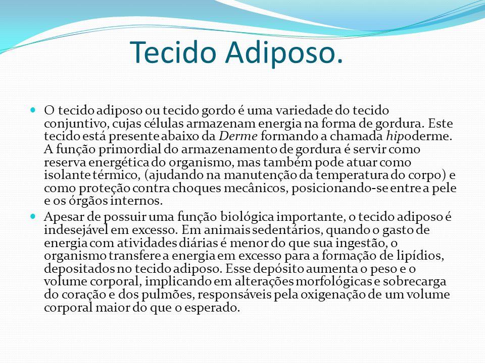 Tecido Adiposo. O tecido adiposo ou tecido gordo é uma variedade do tecido conjuntivo, cujas células armazenam energia na forma de gordura. Este tecid