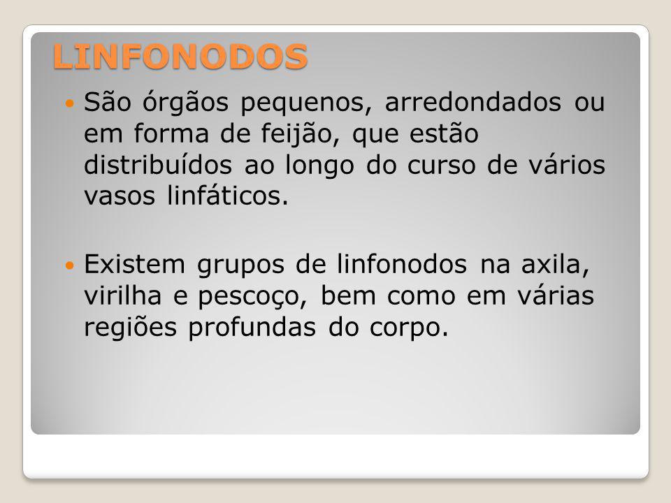 LINFONODOS São órgãos pequenos, arredondados ou em forma de feijão, que estão distribuídos ao longo do curso de vários vasos linfáticos.