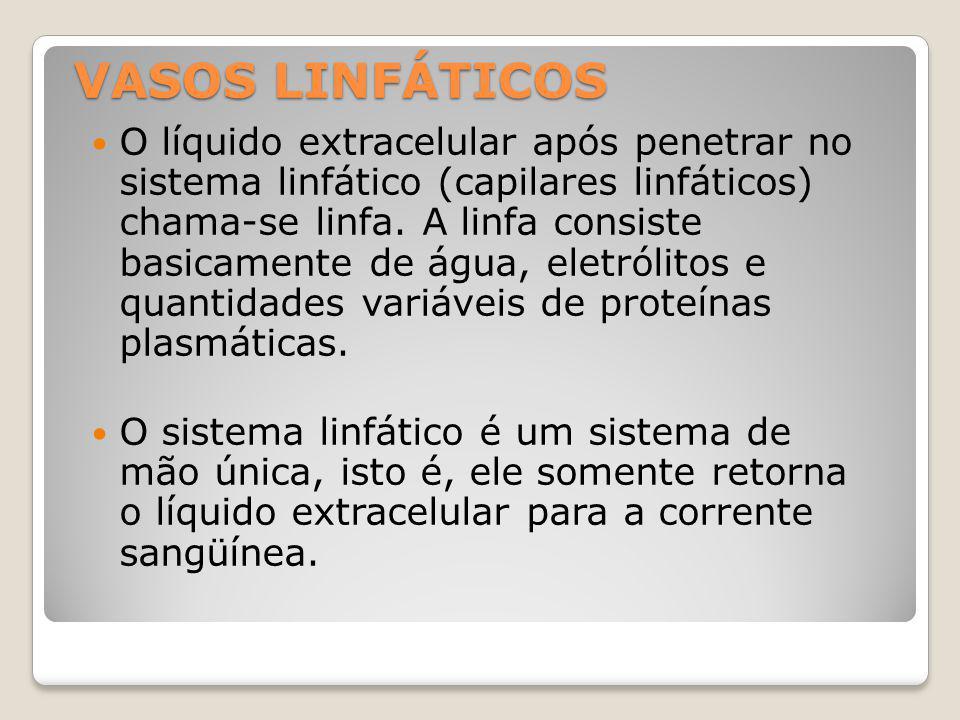 VASOS LINFÁTICOS O líquido extracelular após penetrar no sistema linfático (capilares linfáticos) chama-se linfa.